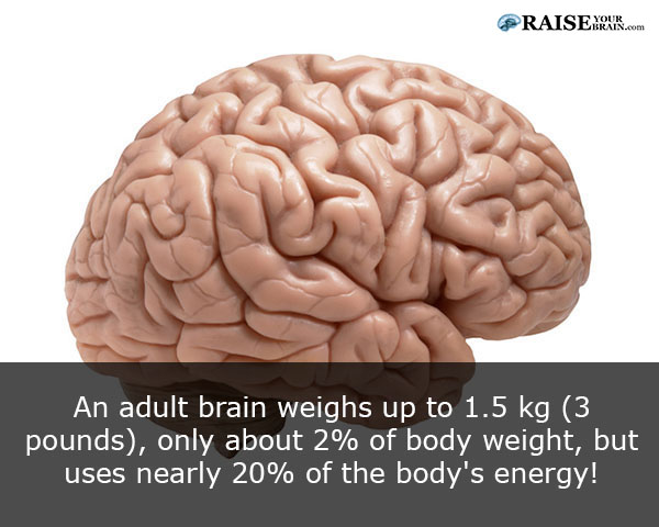 33 human body facts brain parts and functions raiseyourbrain human body facts brain parts and functions 1 ccuart Choice Image