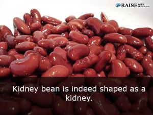 Human body facts: human kidney 63