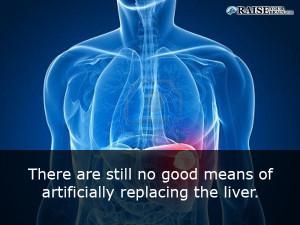 Human body facts: liver functions