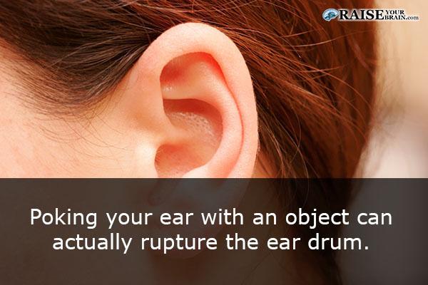 The Human Ear Facts Human Body Facts Raiseyourbrain Com