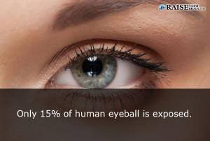 eyefact31