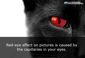 eyefact37
