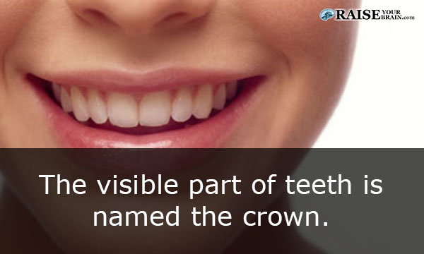 Facts About The Human Mouth 70