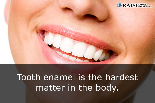 Facts About The Human Mouth 52