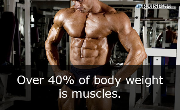 18 interesting human body muscles facts - raise your brain, Muscles