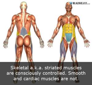 musclefact50