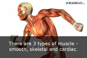 musclefact52