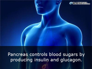 pancreas fact - Interesting Human body facts 3