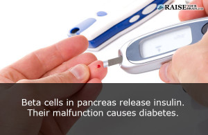 pancreasfact8