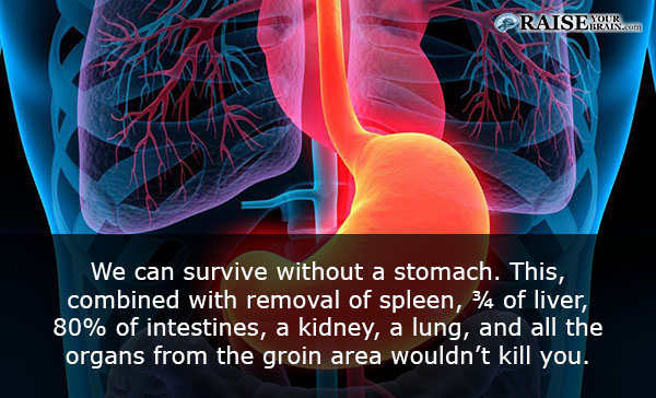 12 Interesting stomach facts: Human body facts - RaiseYourBrain