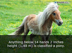 19 fun facts about horses - Raise Your Brain