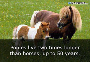 23 Interesting facts about horses and ponies - RaiseYourBrain
