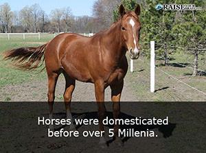 horses 33