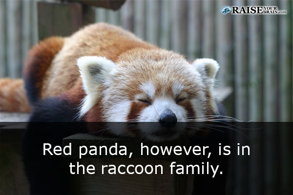 30 fun facts about pandas and their life raise your brain voltagebd Choice Image