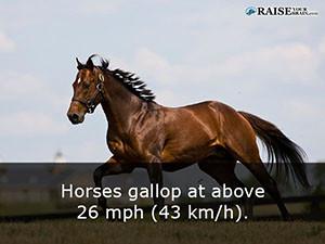 horses 35