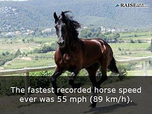 horses 36