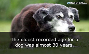 31 Weird animal facts about dogs - Raise Your Brain