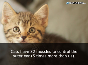 catfacts48