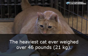 catfacts49