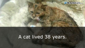 catfacts50