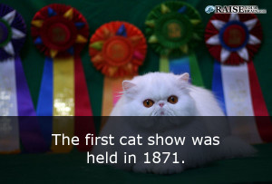 catfacts51