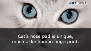 catfacts53
