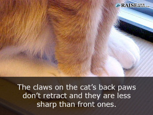 catfacts59