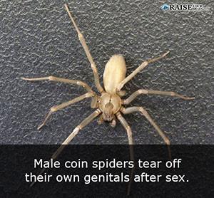 Random Fun Sex Facts 108