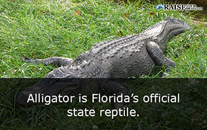interesting facts about florida