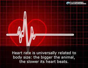 arteries1
