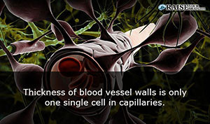 arteries19
