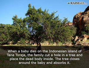Amazing Baby Facts Raise Your Brain - 18 shocking facts nature